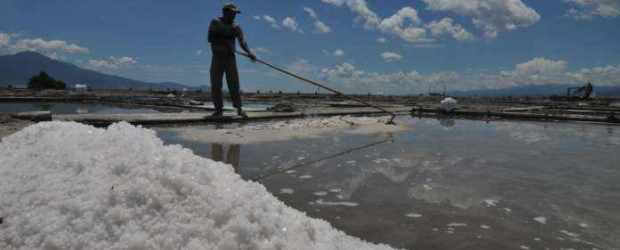 Seorang petani garam sedang memanen (Foto: Ist)