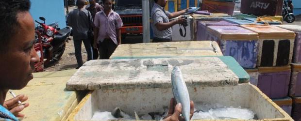 Ikan Berformalin di NTT